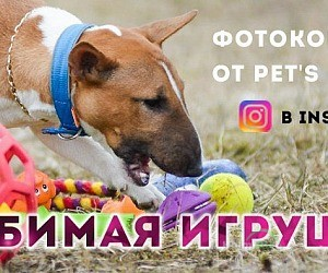 Интернет-магазин зоотоваров petsdream.ru